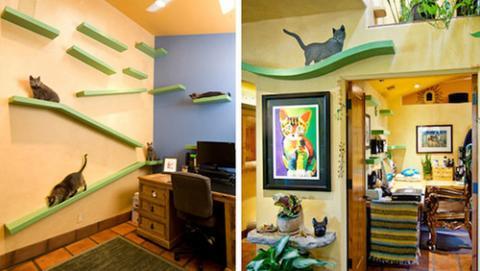 350万円をかけて18匹の猫に天国を作った写真