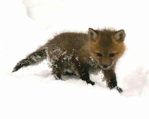 マジで可愛いすぎる動物の赤ちゃん画像
