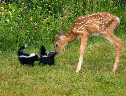 陽気で本当に可愛い動物の写真