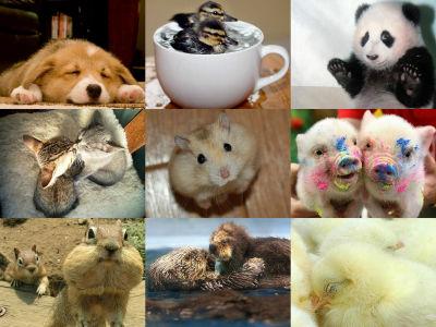 かわいい動物の赤ちゃんたちの写真いろいろ